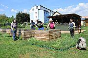 5000 Bienenfutterpflanzen werden im Stadtgarten kostenlos verteilt.